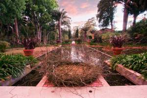 Water garden by Gary Smith, Nests for Lotusland